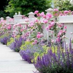 Small Front Yard Design With Beautiful Blooming Flowers 38 - Modern Cottage Garden Plants, Garden Shrubs, Fence Garden, Cottage Gardens, Garden Spaces, Blooming Flowers, Flowering Shrubs For Shade, Rose Companion Plants, Gardens