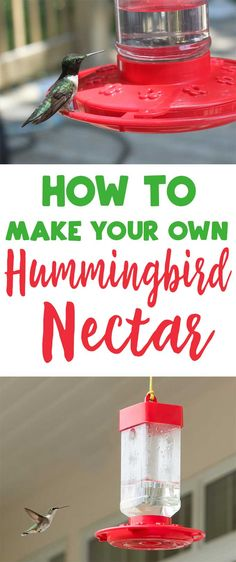 Save money by making your own dye-free homemade hummingbird nectar at home! #garden #hummingbird