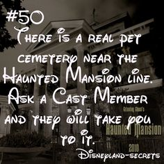 ideas for funny disney facts disneyland secrets Disneyland Secrets, Disney Secrets, Disney Tips, Disneyland Hacks, Disneyland Quotes, Funny Disney Facts, Disney Memes, Disney Quotes, Disney Trivia