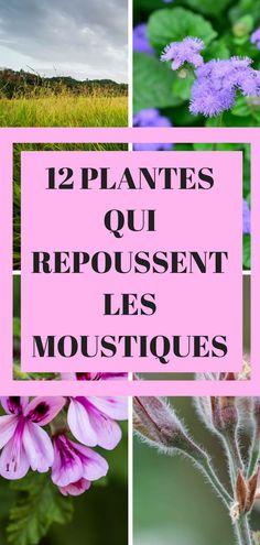 Au cours de cet article, vous allez découvrir les 12 plantes qui vous aideront à repousser naturellement les moustiques. Ce sont des plantes que vous trouverez facilement dans le commerce. #jardins #conseils #astuces #facile #diyhomedecor #epinglercpartager #maison #home