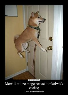 For more funny dog quotes and hilarious animals visit… Funny Animal Quotes, Animal Jokes, Funny Animal Pictures, Funny Photos, Funny Animals, Cute Animals, Dog Jokes, Dog Humor, Silly Pics