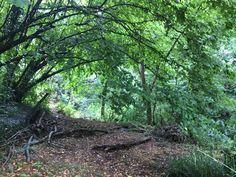 I boschi che abbracciano la tenuta