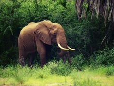 #africa one love elefante