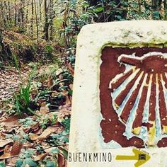 120 Ideas De Camino De Santiago Camino De Santiago Camino Santiago