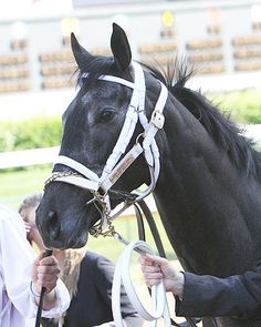 Eight Belles - Courageous champion, my hat is off to her.