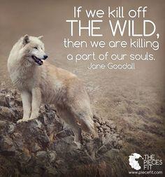 If we kill off the wild . . .   Jane Goodall