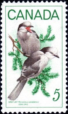 two birds Canada Rare Stamps, Vintage Stamps, Gray Jay, World Birds, Postage Stamp Art, Art Folder, Thinking Day, Mail Art, Stamp Collecting