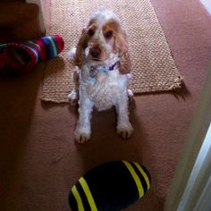 Come on!! Play ball with me!!