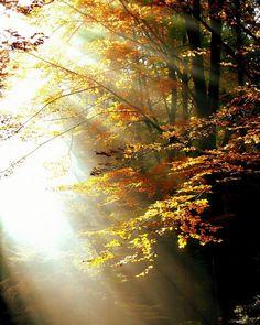 #Moed Moed is met tranen in je ogen aanvaarden wat je niet kunt veranderen. Maar moed is ook met dankbaarheid en vertrouwen elke nieuwe dag met liefde omarmen