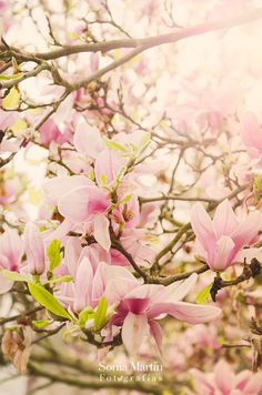 https://flic.kr/p/SxgZ2u | ¡Primavera!!!
