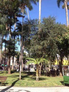 Curitiba sem filtro...céu azul e muito sol...#delicia