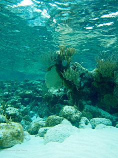 Blues and greens of tranquility...ain't that the truth? #snorkel #grandcayman