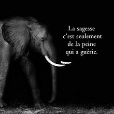 Not sure what I love more- the words of wisdom or the elephant Now Quotes, Great Quotes, Quotes To Live By, Motivational Quotes, Inspirational Quotes, Quotable Quotes, Wisdom Quotes, Life Quotes, The Words