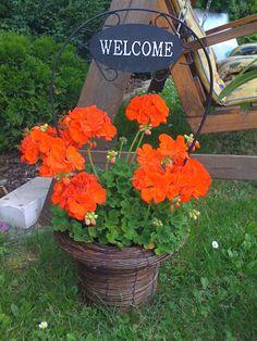 Naše bydlení a zahrada – 111390286074297235516 – Webová alba Picasa