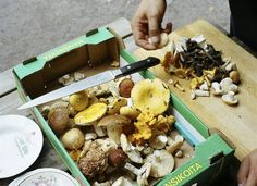 Hunting for wild mushrooms with Finnish Chef Antto Melasniemi Wild Mushrooms, Stuffed Mushrooms, Mushroom Cultivation, Wild Game Recipes, Mushroom Hunting, Mushroom Fungi, Wild Edibles, Tasty Bites, Mushroom Recipes