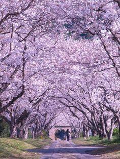 Sakura, Takeo, Saga, Japan