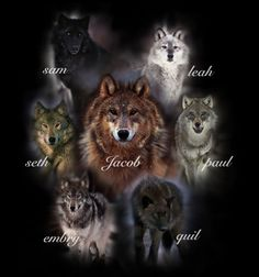 Quileute tribe The Wolves. The whole gang! Leah Clearwater, Paul Lahote, Quil Ateara, Embry Call, Seth Clearwater, Sam Uley and Jacob Black