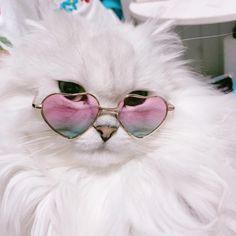 Картинки по запросу белый котик в очках сердечках