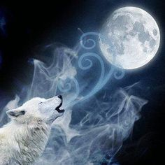 White wolf with ice blue eyes pic | Wolves | Pinterest | Wolves ...