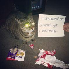Cat shaming. Cat Shaming, Animal Humor, Christmas Gifts, Holiday, Funny Animals, Laughter, Pets, Quotes, Animal Funnies