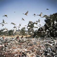 Jason Larkin Commercial rubbish dump City Deep, Johannesburg, 2010
