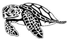 Black and white sea turtle drawing - Bing Images