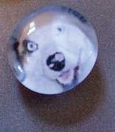 A DIY glass-topped, pet photo magnet - Great for gifts!