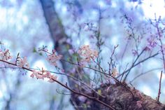 spring day - Japanese scenery of the morning of spring. You will be surprised to see the beautiful scenery. This place is a suburb of Shizuoka Prefecture. Spring of Japan will bloom cherry. Sakura will be seen everywhere in Japan.