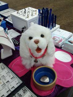 Mindy valmistautuu magneettikorujen myyntiin Oulun kansainvälisessä koiranäyttelyssä 2013.