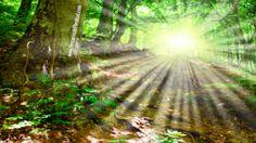 Devocional Diario - Hoy... El Señor Será Mi Luz | En Lugares de Delicados Pastos | - Recursos Cristianos Gratis en Internet