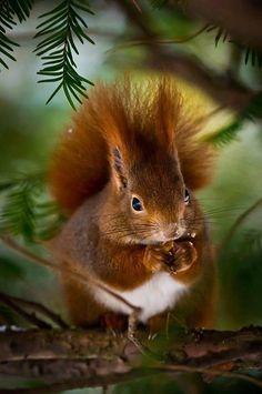 Most Beautiful Animals, Beautiful Birds, Beautiful Creatures, Squirrel Pictures, Cute Animal Pictures, Nature Animals, Animals And Pets, Photo Animaliere, Cute Squirrel