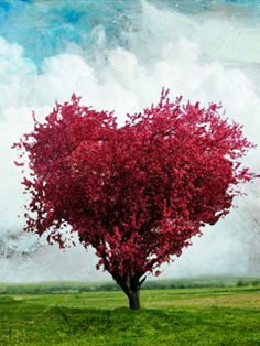 Love Tree / Mobiles99.com