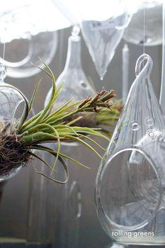 Hanging terrarium accents | Rolling Greens