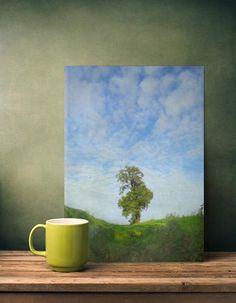 tree sky flora photograph nature landscape vintage solitaire Landscape