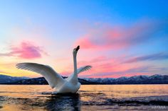 Photo Swan Lake by Ryu Jong soung on 500px
