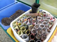 Make tubes from newspaper (Paper towel rolls?), pack them gently with potting soil and add one seed (soaked overnight in water) per tube. Each seedling will develop a much deeper root system than those in shallow nursery pots, and the entire tube can later be planted in the garden.