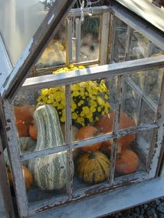 What a great combination...old windows,pumpkins and mums!