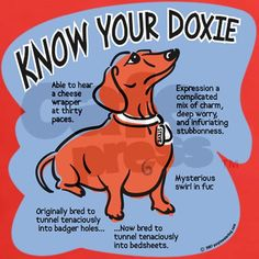 Know your dachshund Tee