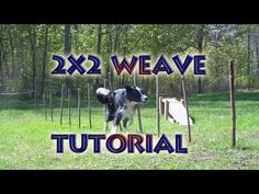 Agility Training Tutorial - Weave Poles (2X2 Poles Method) - http://www.thehowto.info/agility-training-tutorial-weave-poles-2x2-poles-method/