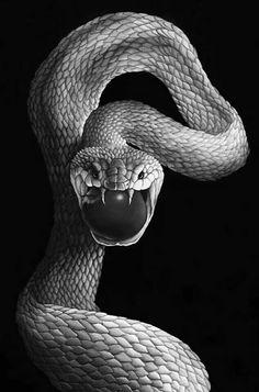 Splash of color ❤️❤️❤️❤️ Snake Drawing, Snake Art, Dark Fantasy, Fantasy Art, Snake Wallpaper, Red Colour Palette, Red Color, Cute Snake, Beautiful Snakes