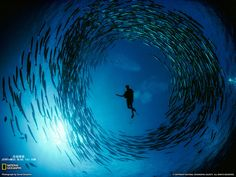 Under the #sea