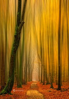 . colorful pathways, forest, hall trees