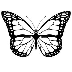 imagenes de mariposas gratis