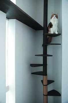 Behavior Training For Your Stubborn Cat Cat Habitat, Cat Wall Furniture, Cat Wall Shelves, Cat Climber, Cat Stairs, Diy Cat Tree, Cat Towers, Cat Playground, Animal Room