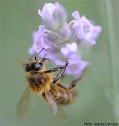 Le miel, c'est du vol? Les produits de la ruche sont-ils véganes ?