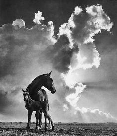 Pedro Luis Raota • Horses