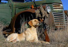 Labrador Retriever Chukar hunting old truck