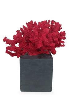 Coral by Three Hands at Gilt