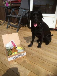 Mira - DoggieBag.no #DoggieBag #Hund #Labrador