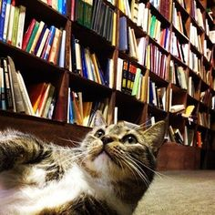 """""""Watch where you step…' This looks like my upstairs hallway--except MY shelves don't have any available shelf space. Of course. (From Buzzfeed: An Ode To Bookstore Cats)"""